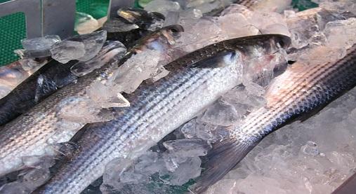 青魚ダイエット