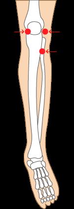 膝つぼ|前