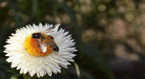 花粉ハーブ