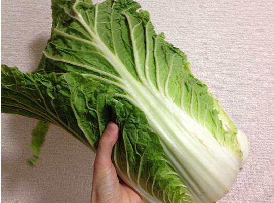 白菜の主な栄養分とすごい効能まとめ|保存方法や料理レシピも3