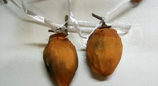 しぶ柿で甘~い干し柿を作ろう!?おうちで簡単つるし柿のレシピ!5