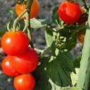 オリーブ&トマトダイエット!?脂肪を溜めないサプリ~口コミ効果!