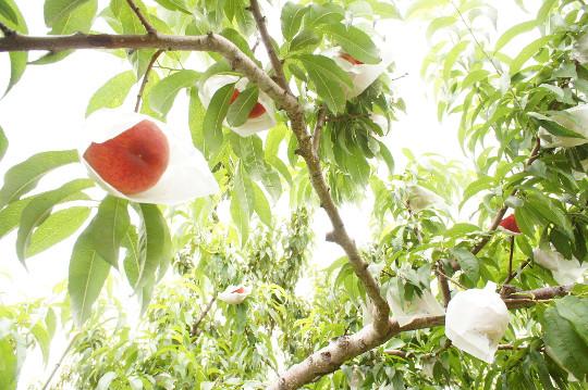 Fructus(フラクタス)に「桃グラノーラ」登場!?こだわりを知るのも楽しい!2