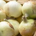 たまねぎの種類と栄養・健康効果|硫化アリル・ケルセチン・糖質・カリウムなど