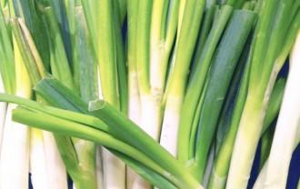 ねぎ(葱)の栄養成分と健康効果・効能|アリシン・硫化アリル・ビタミンC・カルシウムほか
