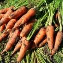 にんじん(人参)の栄養成分と健康効果・効能 βカロテン・カリウム・鉄・ビタミンB・Cなど