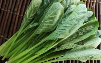 小松菜の栄養成分と健康効果・効能|カルシウム・βカロテン・鉄・ビタミンCほか