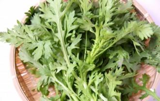 春菊の栄養成分と健康効果・効能|胃腸の働きをよくし・骨粗鬆症を予防する食品!