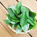 モロヘイヤの栄養成分と健康効果・効能|βカロテン10000μg・カルシウム260mg・カリウム530mg..驚異的な緑黄色野菜!